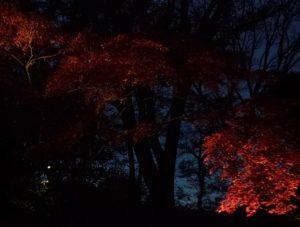 六義園夜の紅葉